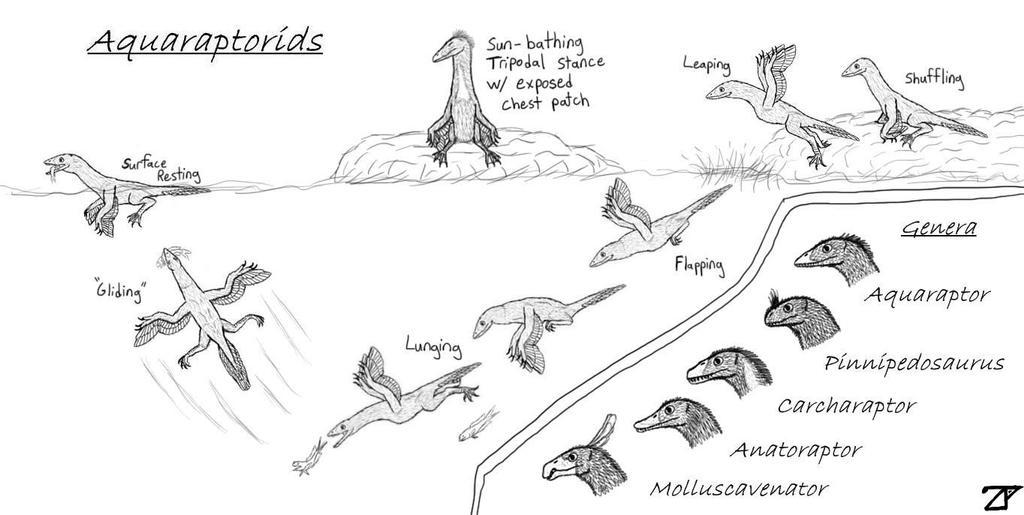 Aquaraptorids