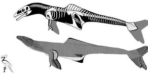 Ornithocetids
