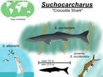Suchocarcharus