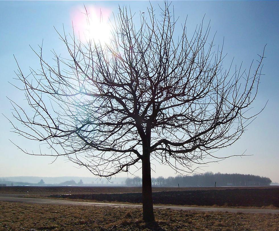 Lonely Tree by UniMatrixZero