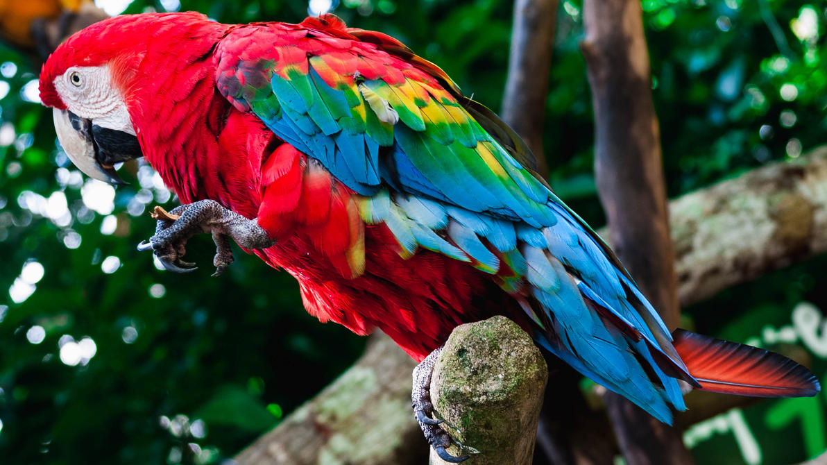 Parrot by YzDock