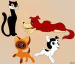 Kitten named Woof