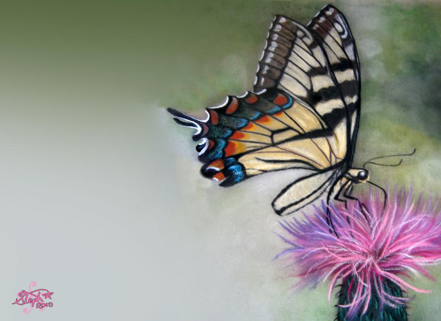 Realistic butterfly paintings - photo#15