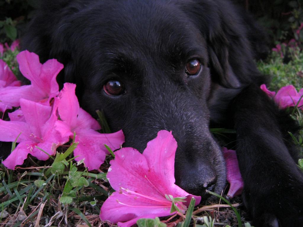 My beautiful dog by Myrcury-Art