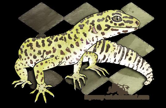 Pancake the Leopard Gecko