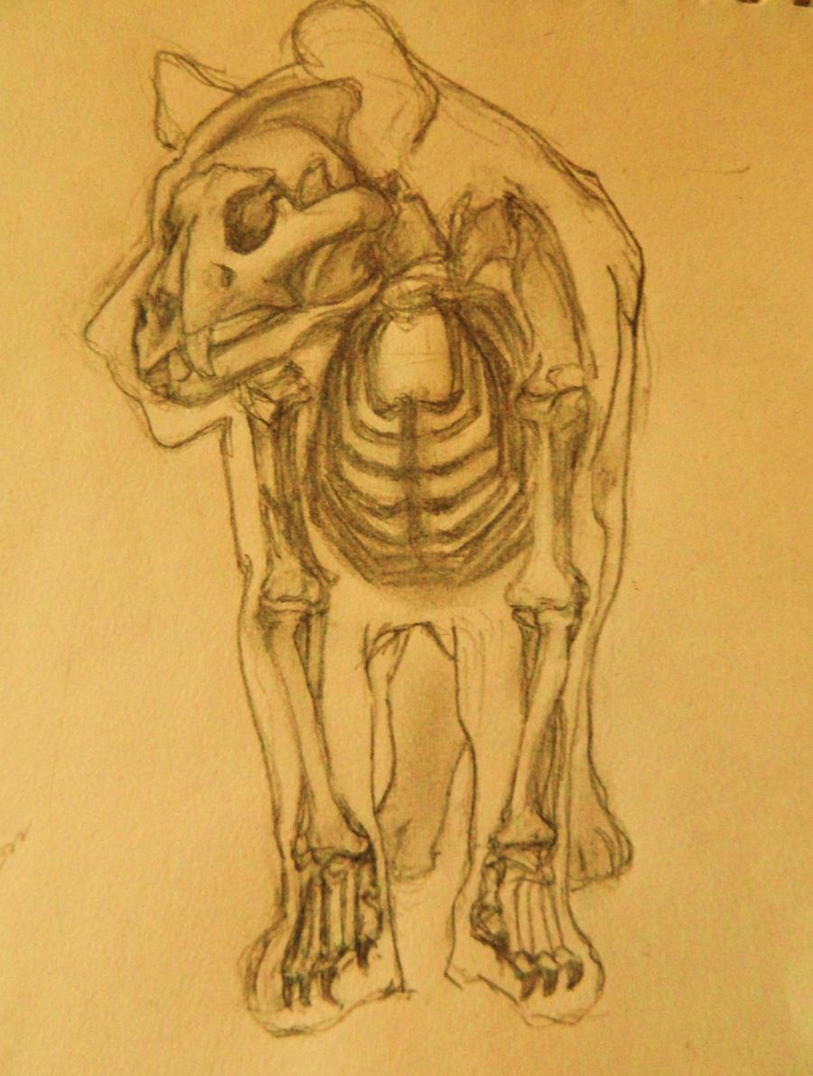 Lion Skeleton Anatomy