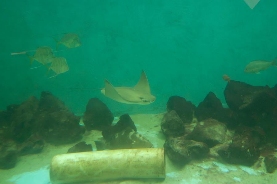 undersea 1 by MLeighS