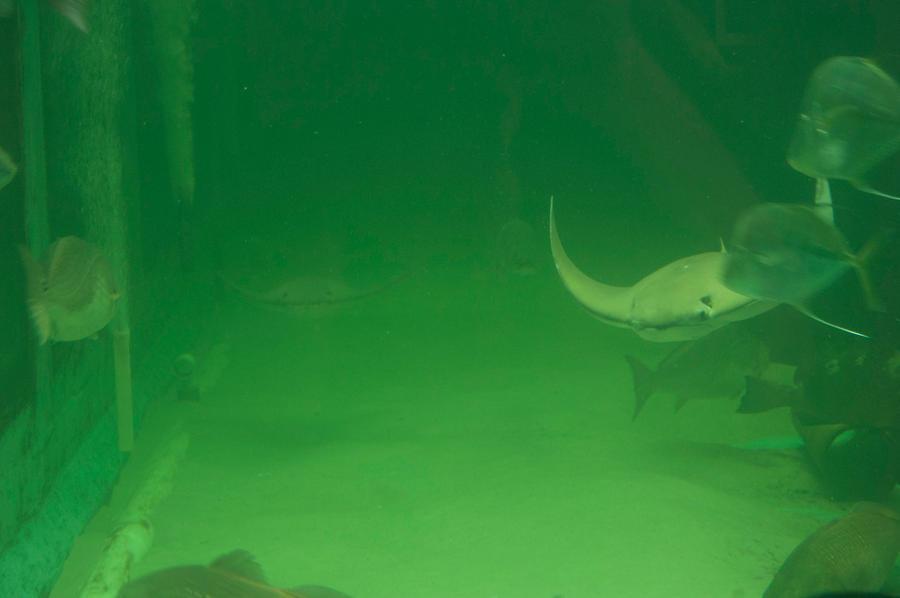 undersea 2 by MLeighS