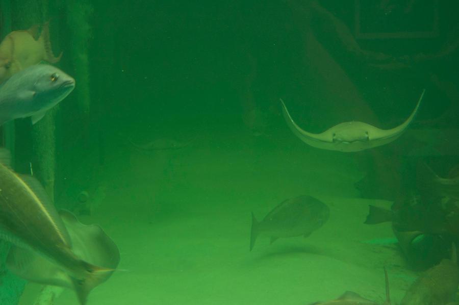 undersea 3 by MLeighS