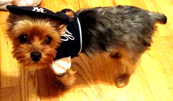 Yankees biggest fan by May5