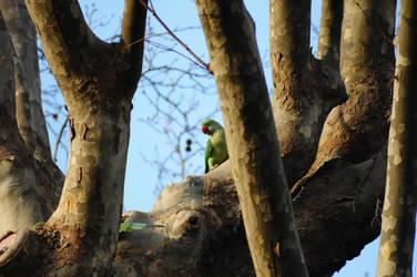 parrot by bilaluzun