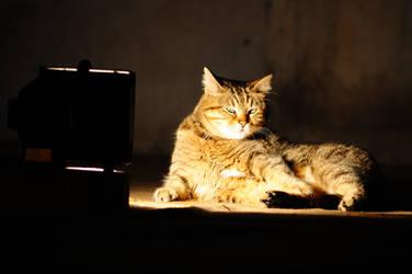 cool cat by bilaluzun