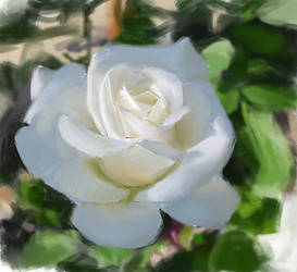 Rose - painting exercise