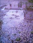 Rain in my backyard by Pojypojy