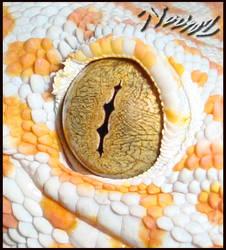 Toga's Eye
