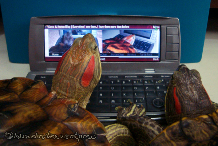 Blogging Turtles by NovRoz
