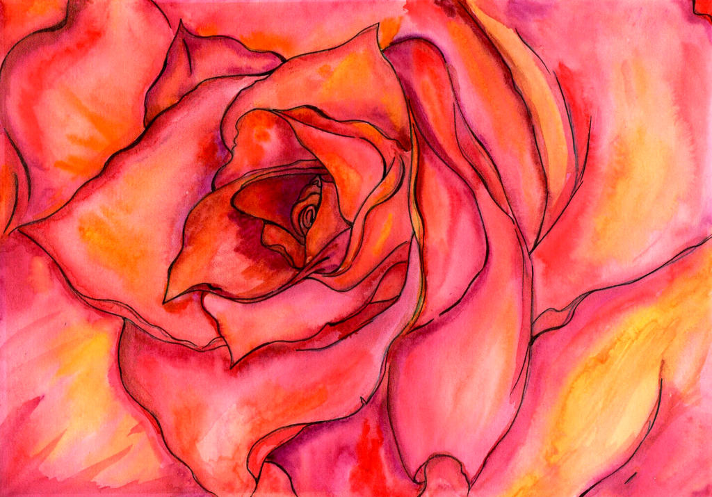 Rose by Guericke