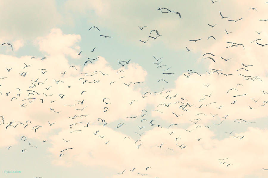 above the clouds birds fly to the happiness by kokanbalik
