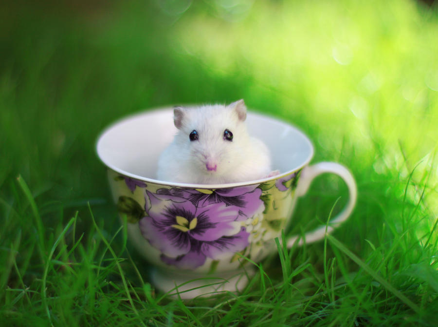 Hamster by CassiesCrue