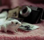 VINTAGE Hamster I