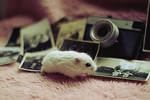 VINTAGE hamster II