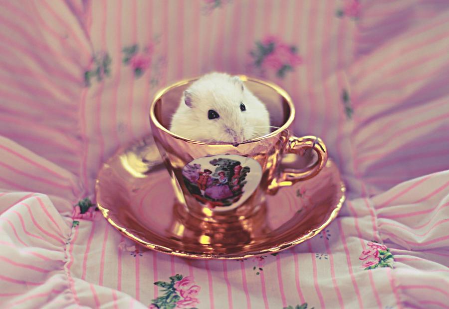 najromanticnija soljica za kafu...caj - Page 6 Pink_hamster_by_cassiescrue-d4o788a