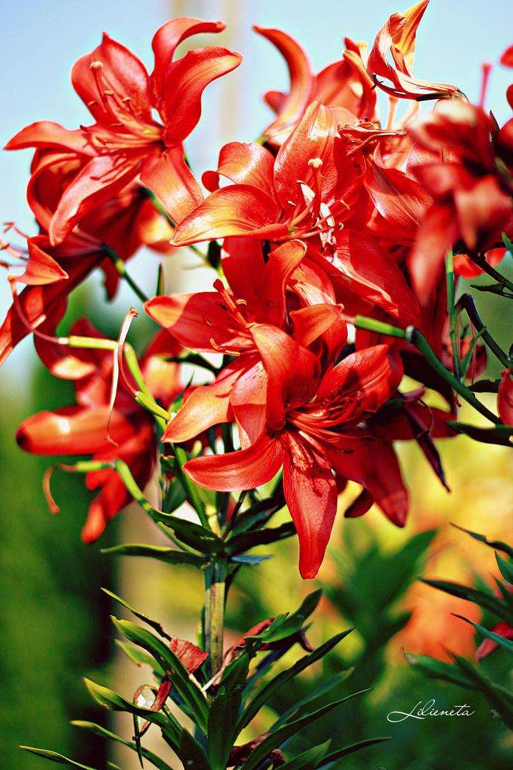 Flowers by CassiesCrue