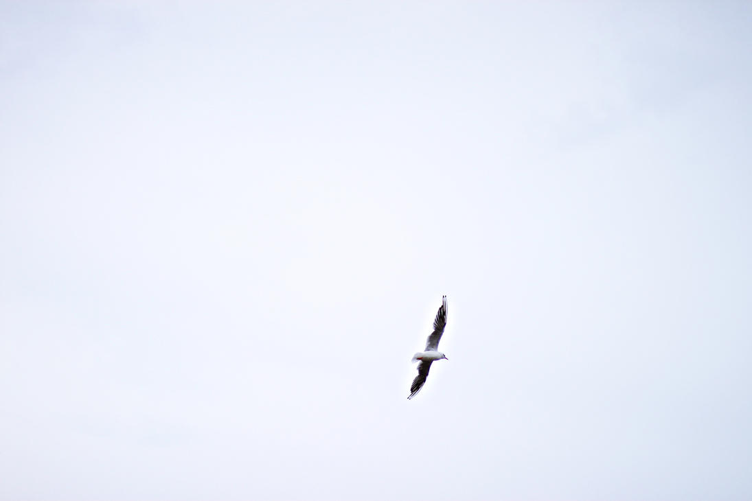 Freedom by CassiesCrue
