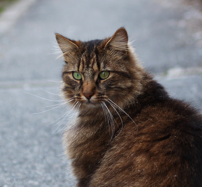 Kitty IV by tjuh
