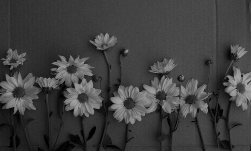 Little flowers black and white by vallendesterstock on deviantart little flowers black and white by vallendesterstock mightylinksfo
