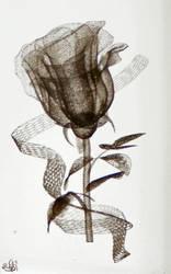 rose by Sternenstaubfinger