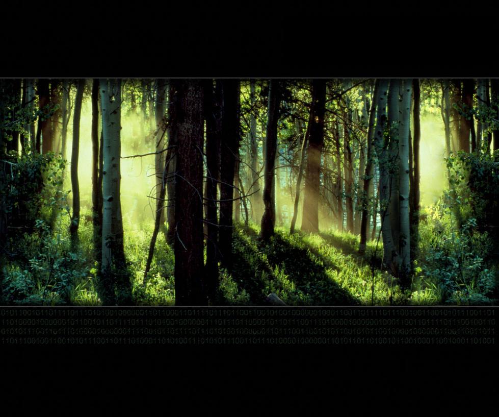 Forest En' Code by Zethriel