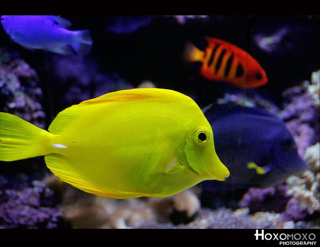 Nature Made Ultra Omega Fish Oil