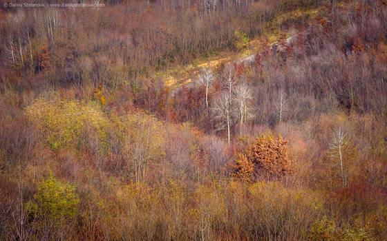 Autumn Colors by TalesOfAldebaran