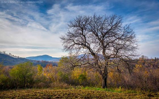 Pear Tree by TalesOfAldebaran
