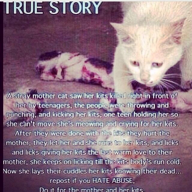 story hates pets