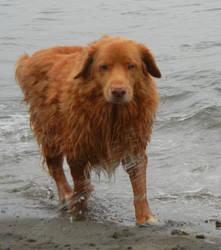 Old Sea Dog