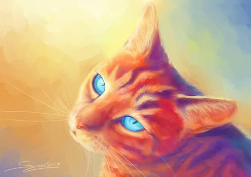 [Request] Colorful cat