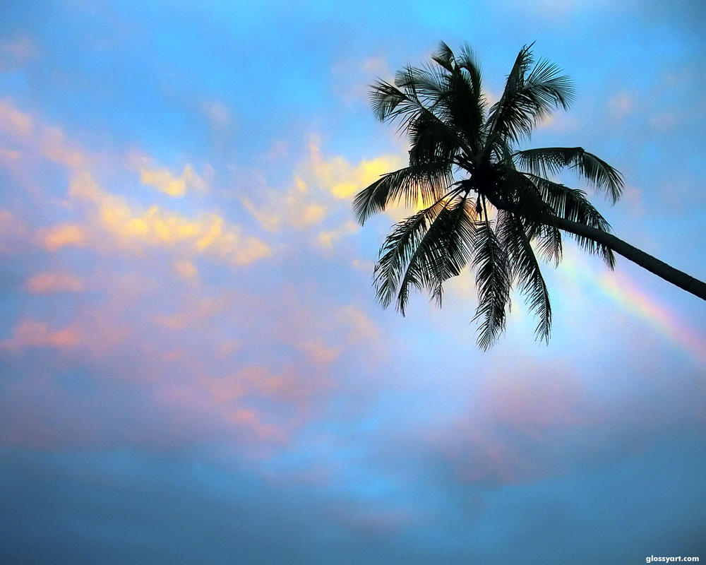 Palm Tree Wallpaper By Nxxos