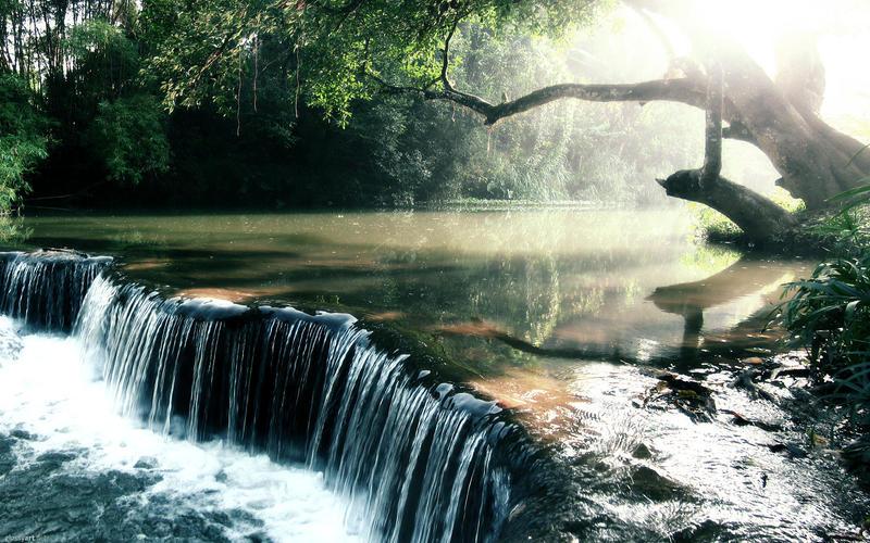 Rainforest Creek Wallpaper by nxxos