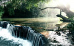 Rainforest Creek Wallpaper