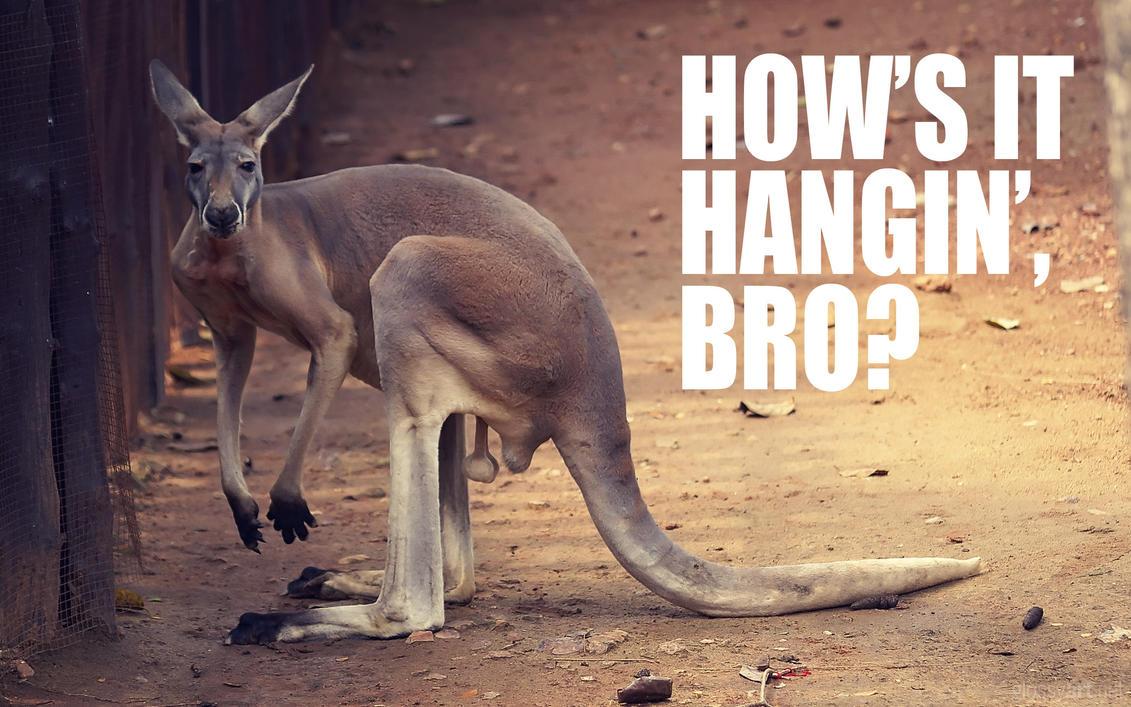 How's It Hangin', Bro? by nxxos
