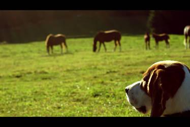 Gardien de chevaux by MrsMay