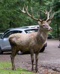 Deer .. 07