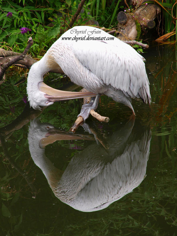 Mirror mirror in the lake.. by Chyriel