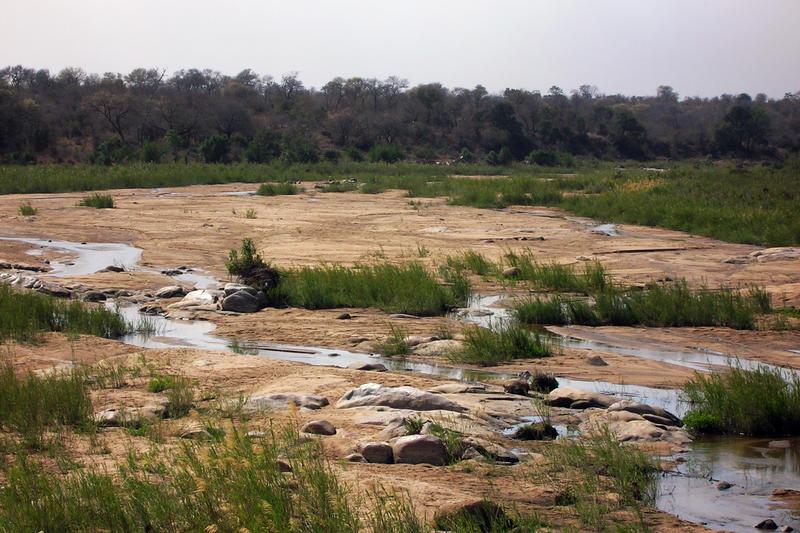 Desert background by cosmopavonestock