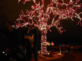 Sparklings visit Zoo Light #3