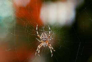 Spider 3 by veruce