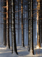 Winter forest by veruce