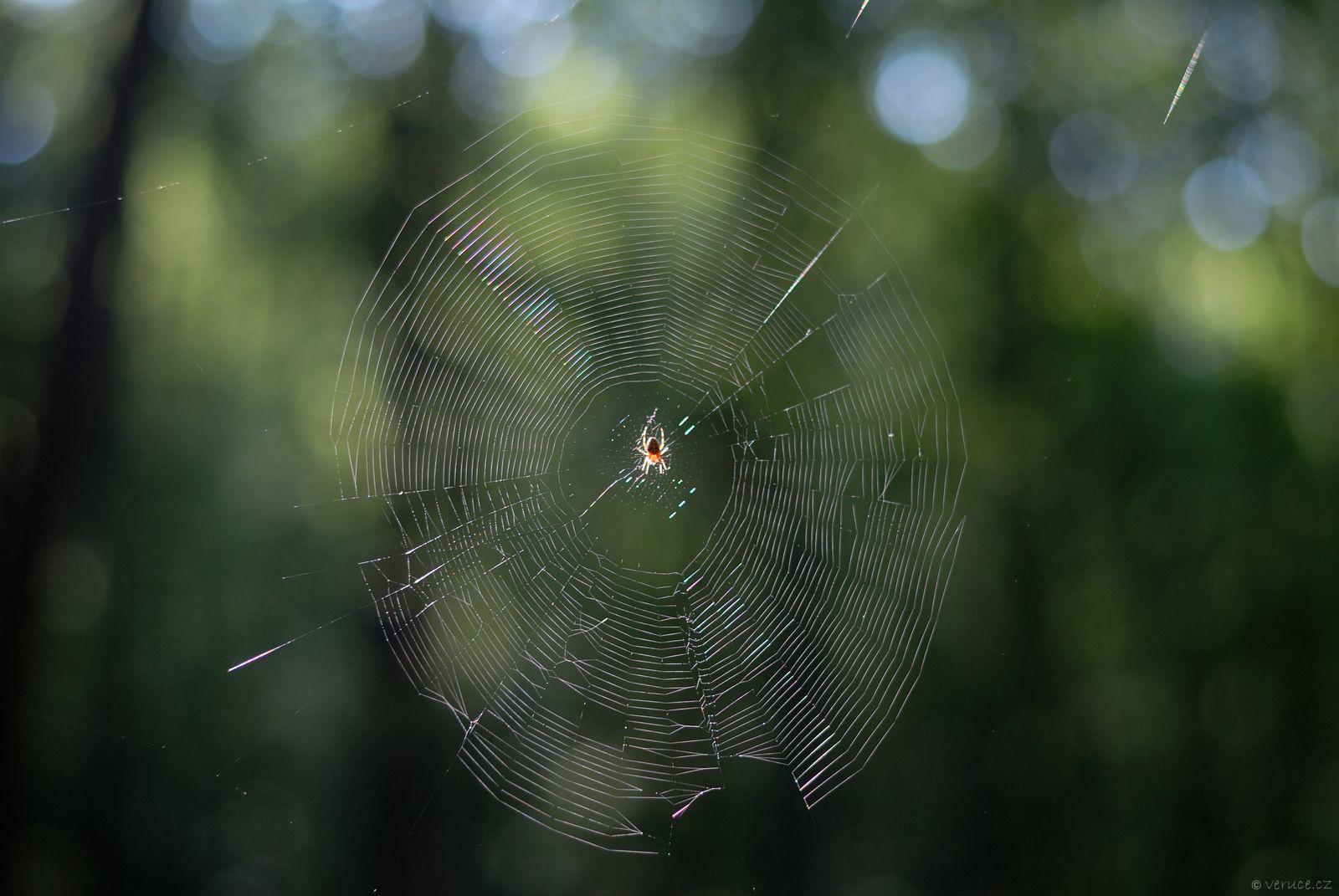 Pavučina - foto